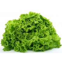 Lettuce Green