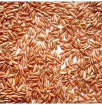Rajmudi Rice